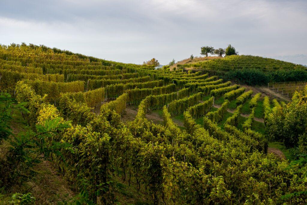 Monferrato: i vini